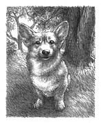 Corgi Drawings - Barney - Pencil Study 01 by Ryan Irish
