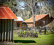 Sheds Digital Art Prints - Barns Print by Sheri McLeroy