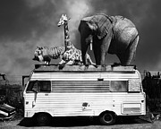 Barnum And Bailey Prints - Barnum and Bailey Goes On a Road Trip 5D22705 Black and White Print by Wingsdomain Art and Photography