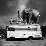 Barnum And Bailey Prints - Barnum and Bailey Goes On a Road Trip 5D22705 Square Black and White Print by Wingsdomain Art and Photography
