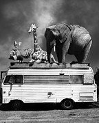 Barnum And Bailey Prints - Barnum and Bailey Goes On a Road Trip 5D22705 Vertical Black and White Print by Wingsdomain Art and Photography