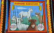 Freak Show Framed Prints - Barnums Barnyard Framed Print by David Lee Thompson