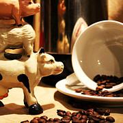 Shaileen Landsberg - Barnyard Coffee