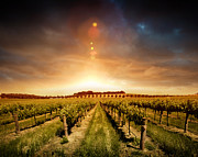 Sunset Posters Pyrography Framed Prints - Barossa Vineyard Framed Print by Boon Mee