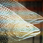 Nature Digital Art - Barramundi by Holly Kempe