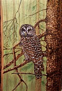 Owl Pyrography Metal Prints - Barred Owl Metal Print by Danette Smith