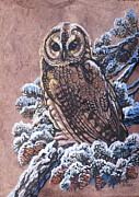 Pine Cones Paintings - Barred Owl First Snow by Anne Shoemaker-Magdaleno