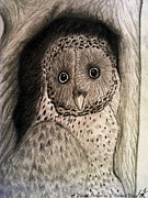 J Michael Mann - Barred Owl