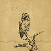 Marilyn Giannuzzi - Barred Owl Sketch