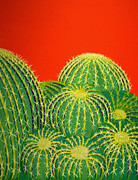 Interior Design Painting Posters - Barrel Cactus Poster by Karyn Robinson