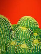 Karyn Robinson - Barrel Cactus