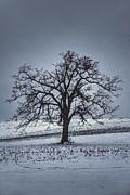 Dan Friend - barren winter scene with tree