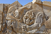 Bas-relief Framed Prints - Bas relief carving of a lion hunting a bull at Persepolis in Iran Framed Print by Robert Preston