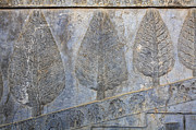 Bas-relief Framed Prints - Bas reliefs depicting cedar trees at Persepolis in Iran Framed Print by Robert Preston