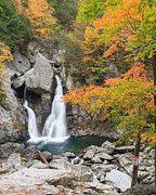 Autumn Landscapes Prints - Bash Bish Falls Portrait Print by Bill  Wakeley