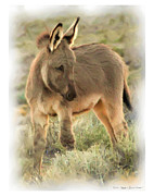 Donkey Digital Art Metal Prints - Bashful Burro Metal Print by Mark and Deidre Ovrebo