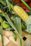 Red Photos Posters - Basket Farmers Market Corn Poster by Carolyn Marshall