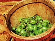 Cuisine Framed Prints - Basket of Green Grapes Framed Print by Susan Savad