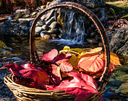 Mick Anderson - Basket of Leaves