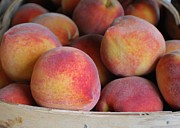 Peaches Photo Prints - Basket of Peaches Print by Kimberly Roberts