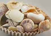 Round Shell Prints - Basket of Shells Print by Steve Kelley