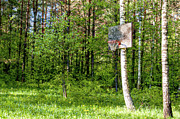 Basket Ball Digital Art Prints - Basketball Forest Court Print by Yevgeni Kacnelson