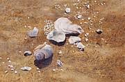 Bass River Seashells Print by Karol Wyckoff