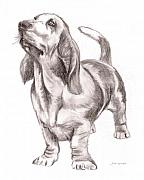 Pencil Drawings Of Pets Posters - Basset Hound Dog Poster by Nan Wright