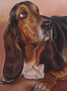 Picture Pastels Framed Prints - Basset Hound Framed Print by Irisha Golovnina