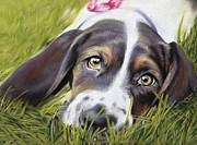 Green And Brown Framed Prints - Basset Hound Framed Print by Natasha Denger