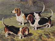 Grass Drawings Posters - Basset Hounds Poster by English School