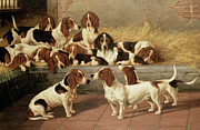 Sleeping Puppies Posters - Basset Hounds in a Kennel Poster by VT Garland