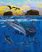 Striped Marlin Prints - Bat Island Off00139 Print by Carey Chen
