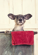 Pet Photo Prints - Bathtime Print by Edward Fielding