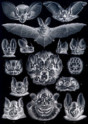 Bats Prints - Bats Bats and More Bats Inverted Print by Unknown
