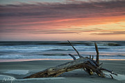 Ocean Images Posters - Battered Driftwood Poster by Phill  Doherty