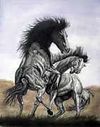 Wild Horses Drawings - Battle For Lead by Melissa Fuller