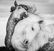 Grace Photos - Battling Stallions by Tim Booth