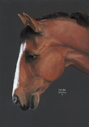 Black Pastels Framed Prints - Bay Horse  Framed Print by Heather Gessell