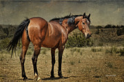 Photomanipulation Photo Prints - Bay Mare Print by Karen Slagle