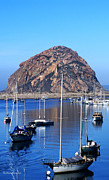 Morro Bay Prints - Bay View Detail Print by Barbara Snyder
