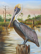 Shorebird Paintings - Bayou Coco Point Pelican by Phyllis Beiser