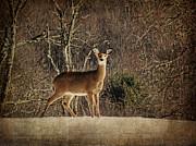 Pamela Phelps - Be Kind to the Deer