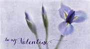 Purple. Iris. Buds Photos - Be My Valentine by Rebecca Cozart