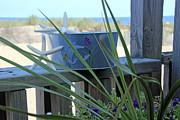 Carolyn Stagger Cokley - Beach 3221