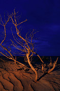 Metal Art Photography Posters - Beach Asleep - Outer Banks at Night I Poster by Dan Carmichael