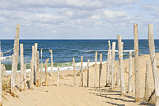 Patricia Hofmeester Metal Prints - Beach at Cape cod Metal Print by Patricia Hofmeester