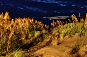 Sea Oats Prints - Beach at Night - Outer Banks Pea Island Print by Dan Carmichael