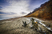 Log Photos - Beach at Scarborough Bluffs by Elena Elisseeva