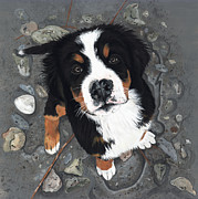 Bernese Mountain Dog Posters - Beach Baby Poster by Liane Weyers